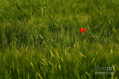 Sweating Photograph - One Flower by Odon Czintos