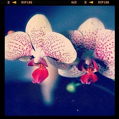 Orchids Photograph - One Of My First Semi-successful Shots by Kiki Bird