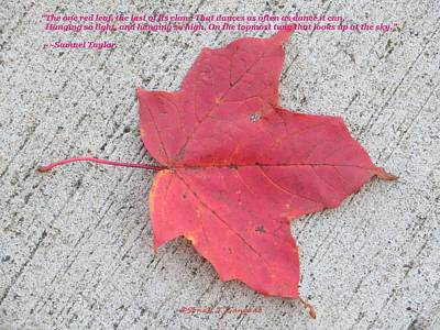 New Years Royalty Free Images - One Red Leaf Royalty-Free Image by Sonali Gangane