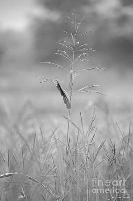 Photograph - One Tall Blade Of Grass On A Foggy Morn - Bw by Maria Urso