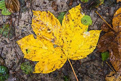 Photograph - One Yellow Autumn Leaf by Matthias Hauser
