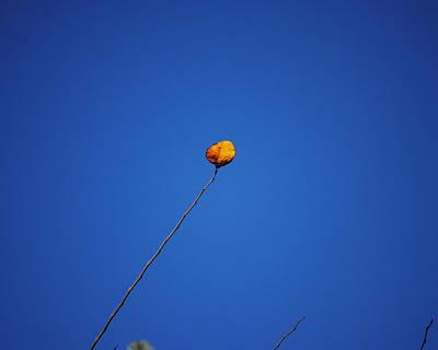 Photograph - One Yellow Leaf by Jai Johnson