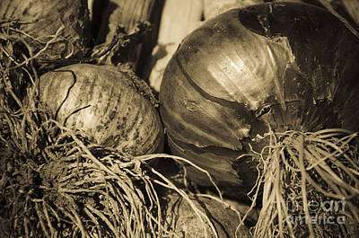 Photograph - Onion And Garlic Sepia by Jim And Emily Bush