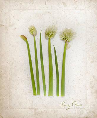 Onion Art Art Print by Linde Townsend
