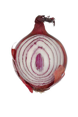 Photograph - Onion by Frank Tschakert