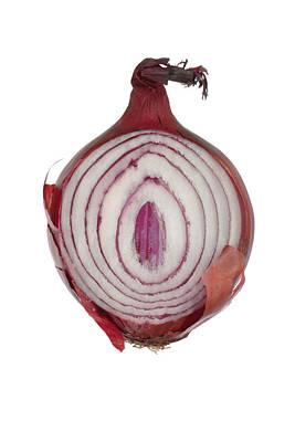 Onion Art Print by Frank Tschakert