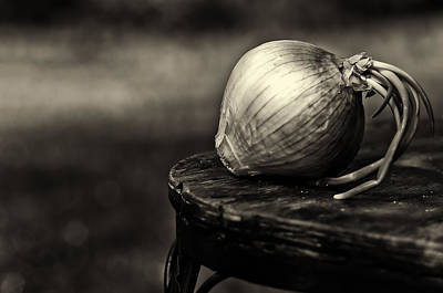 Photograph - Onion by Lori Coleman