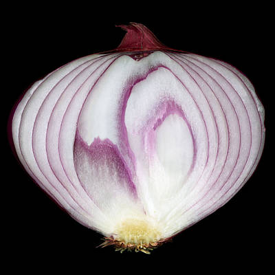 Still Life Photograph - Onion Number 1 by Tim Fleming