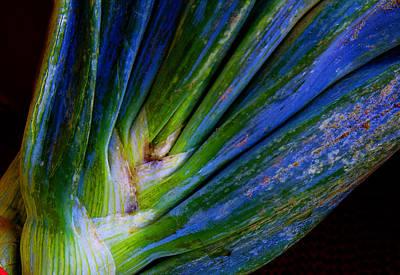 Onions Art Print by Michael Friedman
