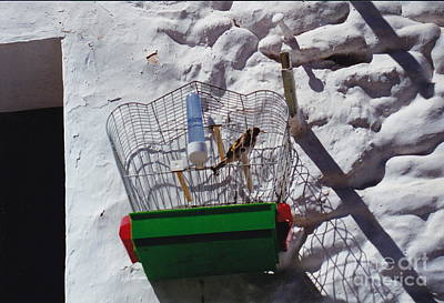 Photograph - Only A Bird In A Spanish Cage by Barbara Plattenburg