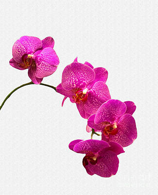 Art Print featuring the photograph Oodles Of Purple Orchids by Michael Waters