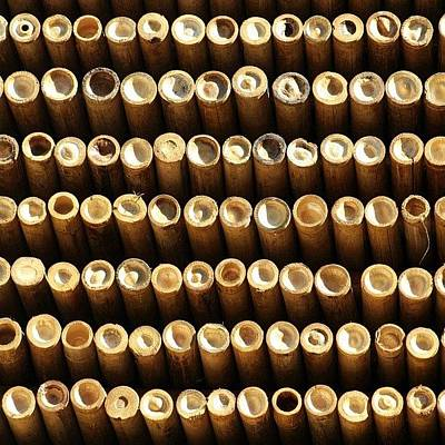 Pattern Wall Art - Photograph - Ooooo #bamboo #thailand #travel by A Rey