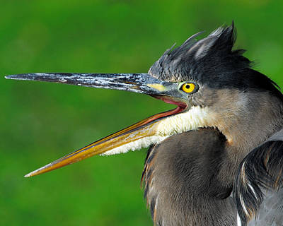 Photograph - Open Wide by Tony Beck