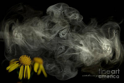 Photograph - Optimisticly Dense Daisies by Vicki Ferrari Photography