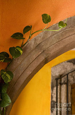Photograph - Orange Arch - Mexico by Craig Lovell