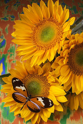 Orange Black Butterfly And Sunflowers Art Print by Garry Gay