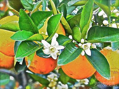 Orange Blossom Special Art Print by Carol  Bradley
