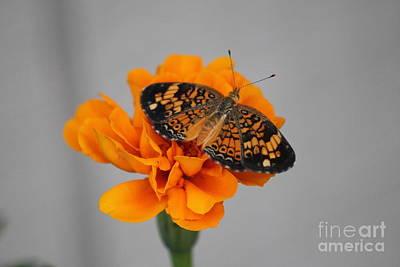 Orange Butterfly 1 Art Print