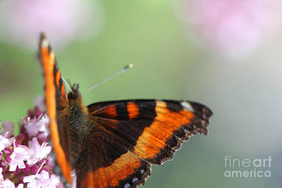 Photograph - Orange Butterfly 2 by Donna L Munro