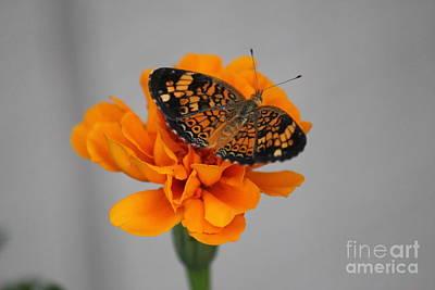 Orange Butterfly 2 Art Print