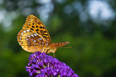 Photograph - Orange Butterfly On Purple Bloom by Lori Coleman