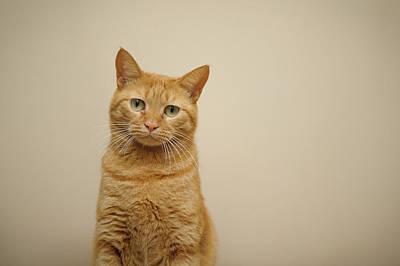 Ginger Cat Photograph - Orange Cat by Akimasa Harada