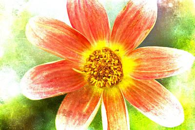 Photograph - Orange Dahlia On Green by Carol Leigh