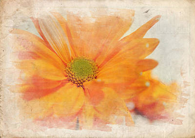 Photograph - Orange Daisy by Ricky Barnard