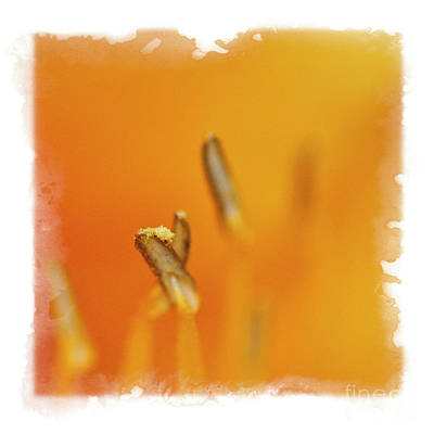 Photograph - Orange by David Waldrop