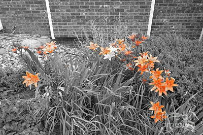 Photograph - Orange Day Lilies. by Ausra Huntington nee Paulauskaite