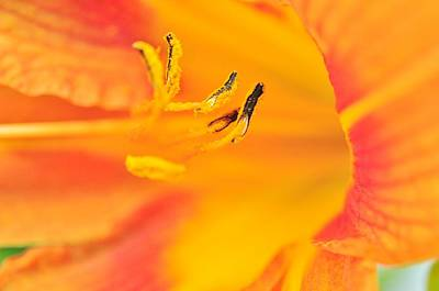Photograph - Orange Daylily  by Puzzles Shum