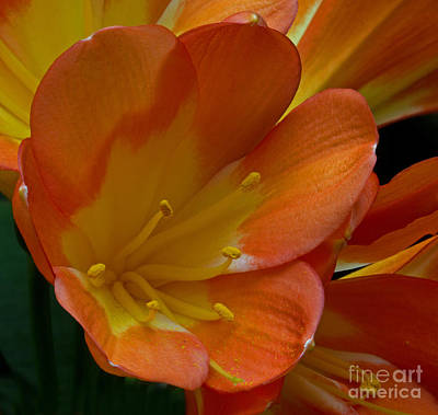 Photograph - Orange Delight by Robert Pilkington