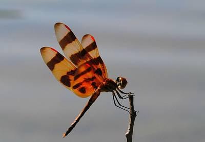 Dragonflys Photograph - Orange Dragonfly by Kimberly Duda