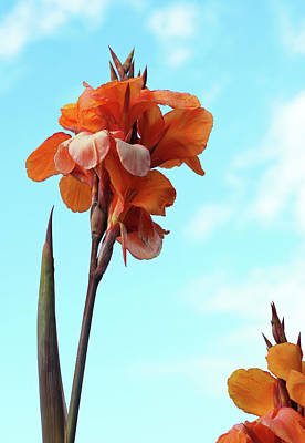 Photograph - Orange Flowers Blue Sky by Lorraine Devon Wilke