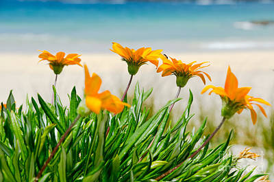 Orange Flowers On The Sunny Ocean Beach. Art Print