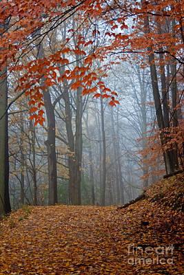 Photograph - Orange Fog by Barbara McMahon