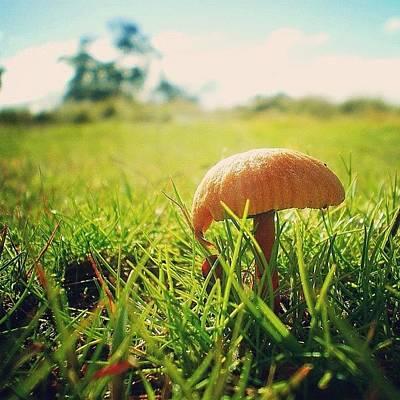 Woodland Wall Art - Photograph - #orange #fungi #green #grass #mushroom by Nicole Spillane