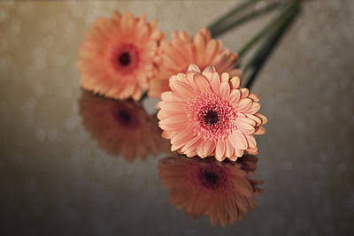 Photograph - Orange Gerbera by Fiona Messenger
