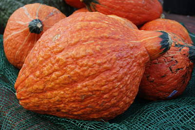 Photograph - Orange Gourd by Margie Avellino