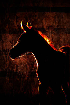 Photograph - Orange Horse by Emily Stauring