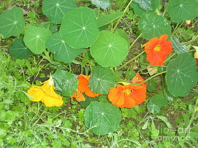 Orange Ivy Art Print