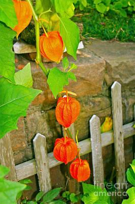 Orange Lanterns Art Print