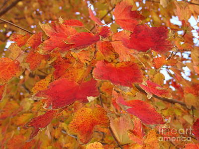 Photograph - Orange Leaves 1 by Rod Ismay