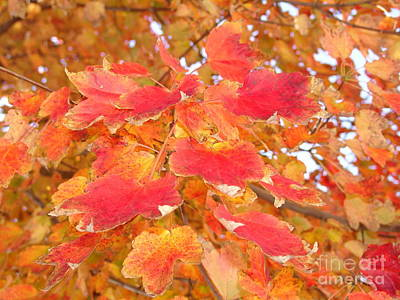 Photograph - Orange Leaves 2 by Rod Ismay