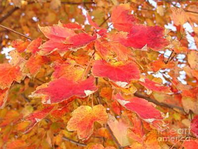 Photograph - Orange Leaves 3 by Rod Ismay