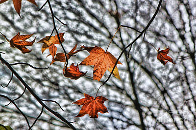 Photograph - Orange Leaves by Jeff Breiman