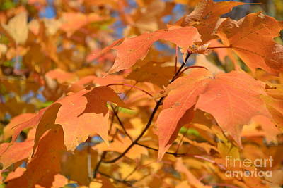 Photograph - Orange Leaves by Justine Gersich