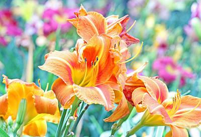 Orange Lilies Art Print by Becky Lodes