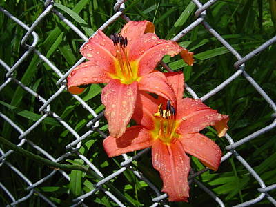 Art Print featuring the photograph Orange Lilly And Dewdrops by Frank Wickham