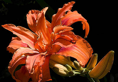 Photograph - Orange Lily by Michael Friedman